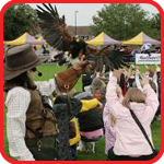 falconry yorkshire