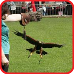 birds of prey display team yorkshire